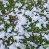 Sneeuwmachine sneeuw huren - Partytentverhuur Leeuwarden